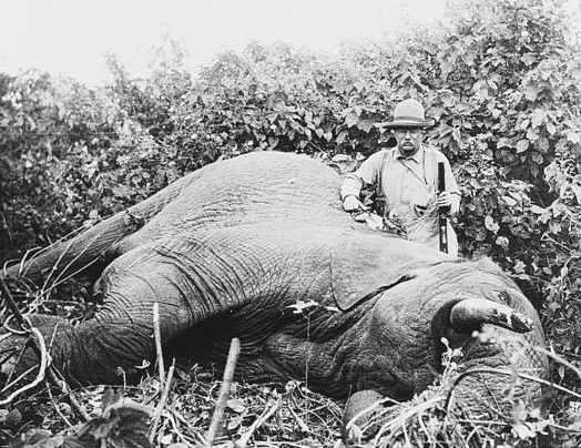 elephant_africa.jpg