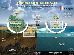 carbon_1.jpg