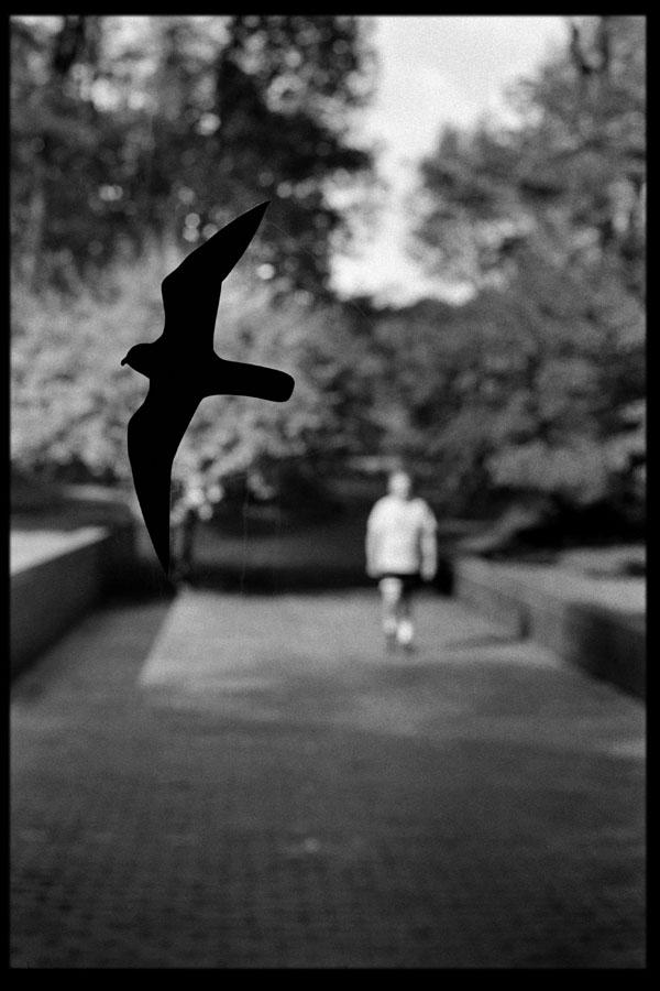 bird_walker.jpg
