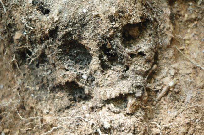 duffy-skull-2.jpg