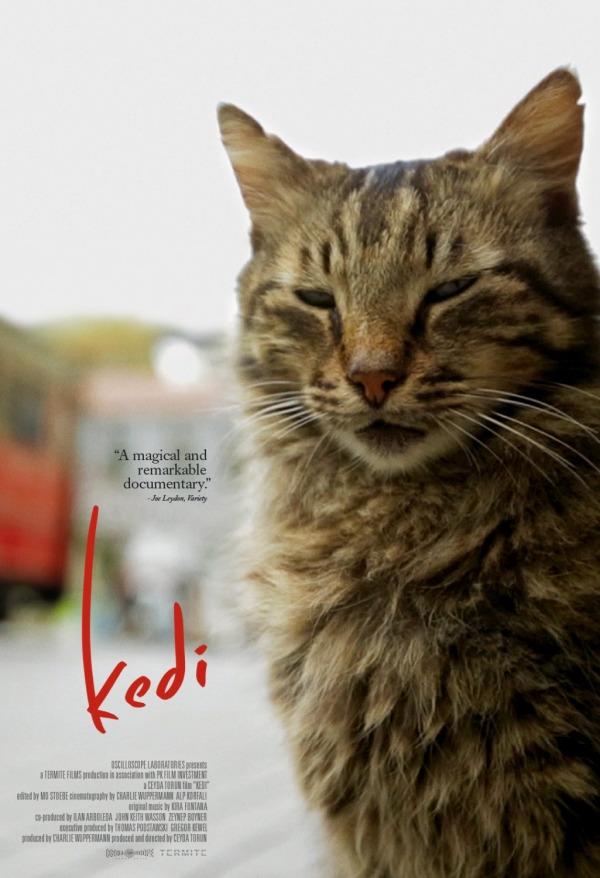 kedi_xlg